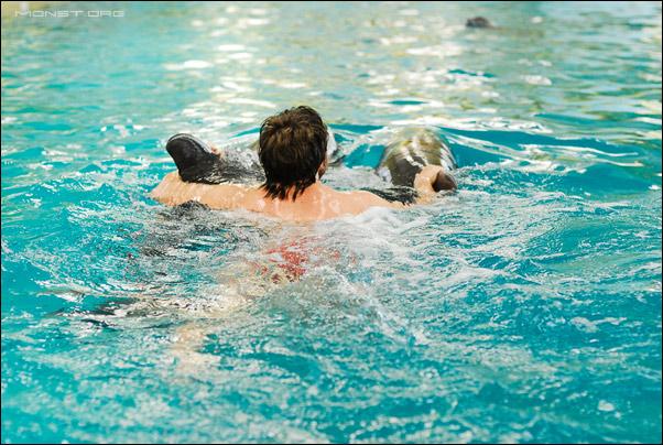 Купание с дельфинами в Крыму